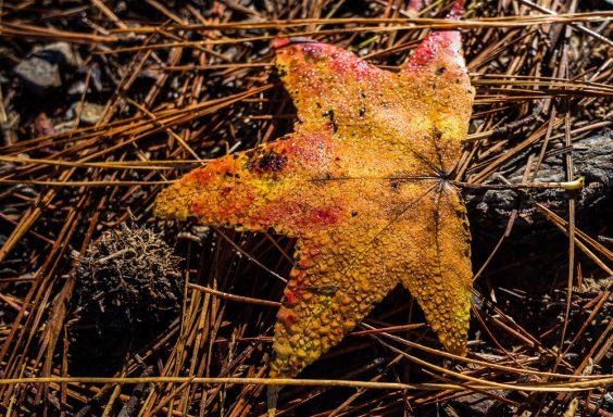 181103 oak mountain in the fall IMG_9416 S