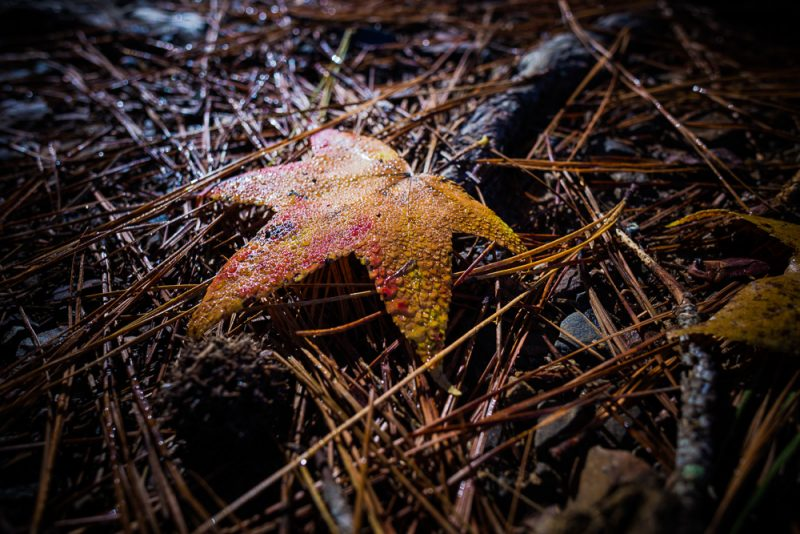 181103 oak mountain in the fall IMG_9426 S