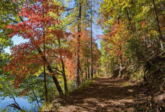 181103 oak mountain in the fall IMG_9440 S
