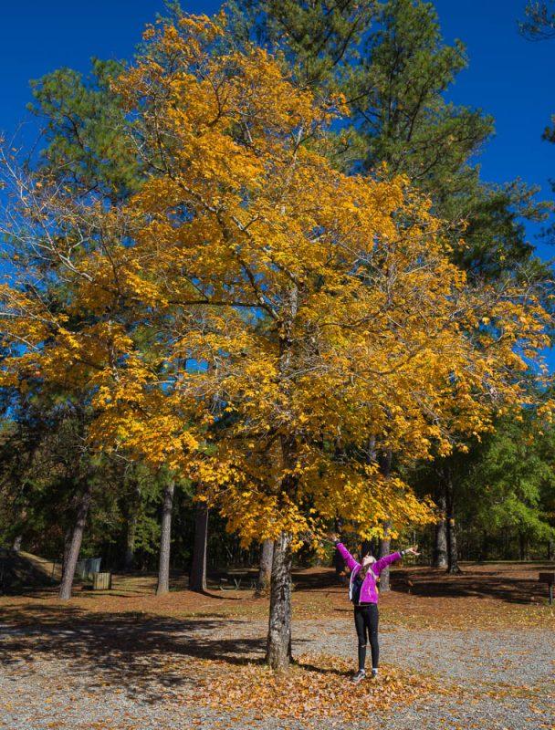 181103 oak mountain in the fall IMG_9449 S