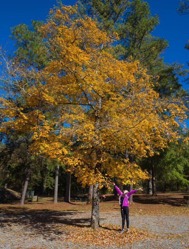 181103 oak mountain in the fall IMG_9450 S