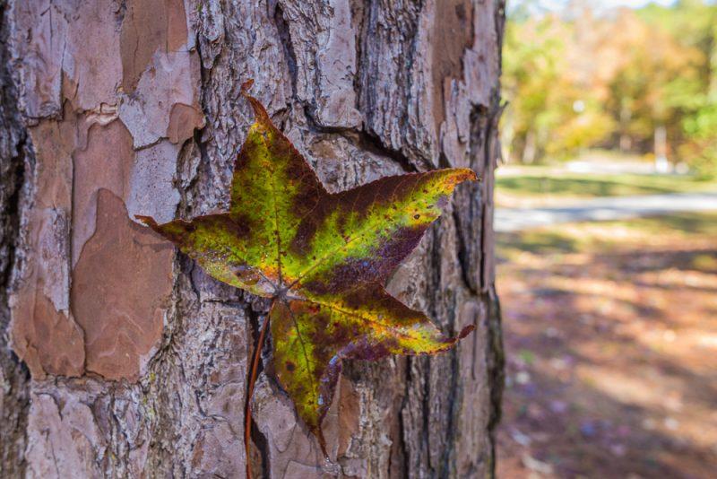 181103 oak mountain in the fall IMG_9497 S