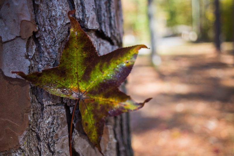 181103 oak mountain in the fall IMG_9503 S