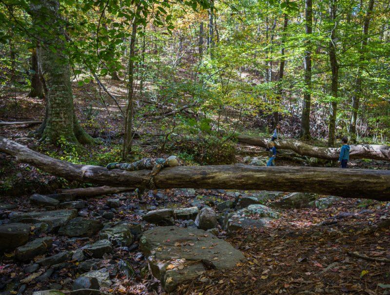 181103 oak mountain in the fall IMG_9531 S