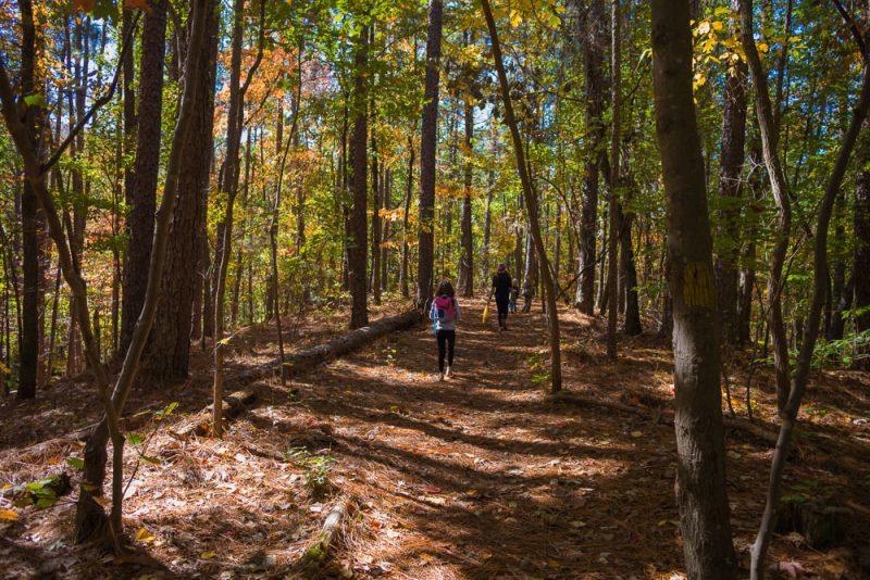 181103 oak mountain in the fall IMG_9563 S