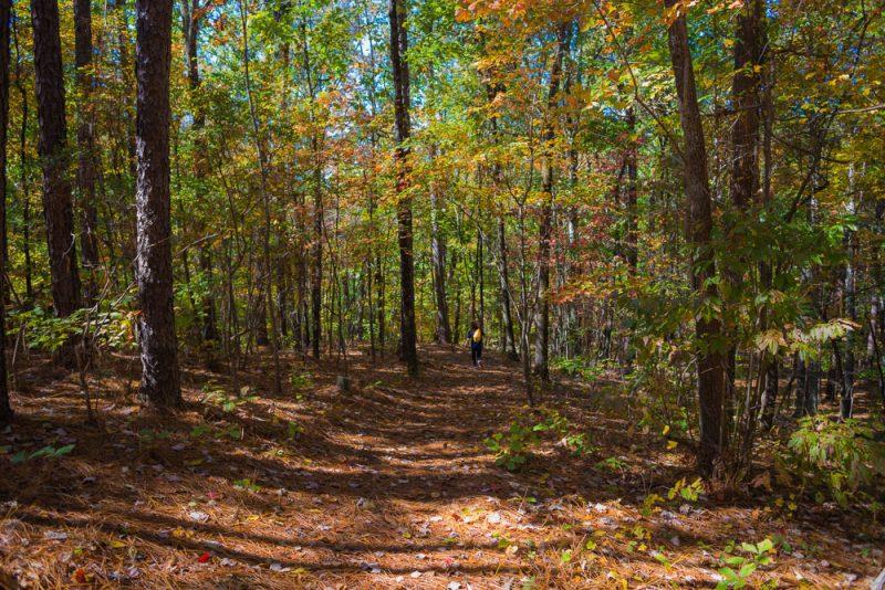 181103 oak mountain in the fall IMG_9565 S