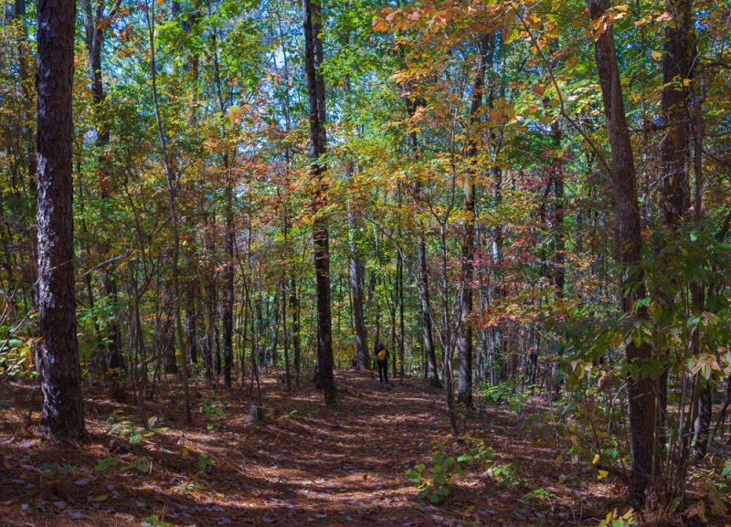 181103 oak mountain in the fall IMG_9567 S