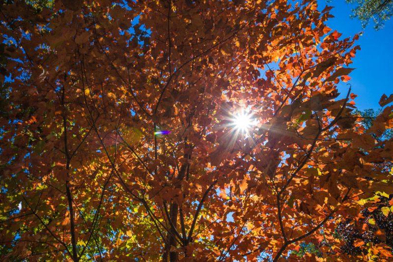 181103 oak mountain in the fall IMG_9584 S