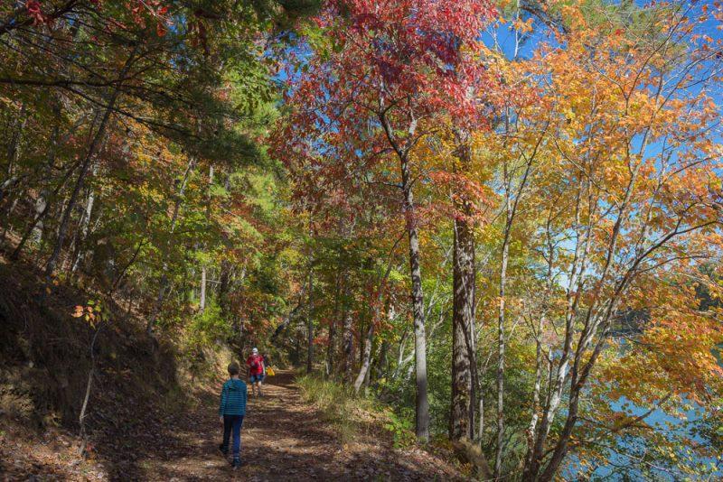 181103 oak mountain in the fall IMG_9589 S