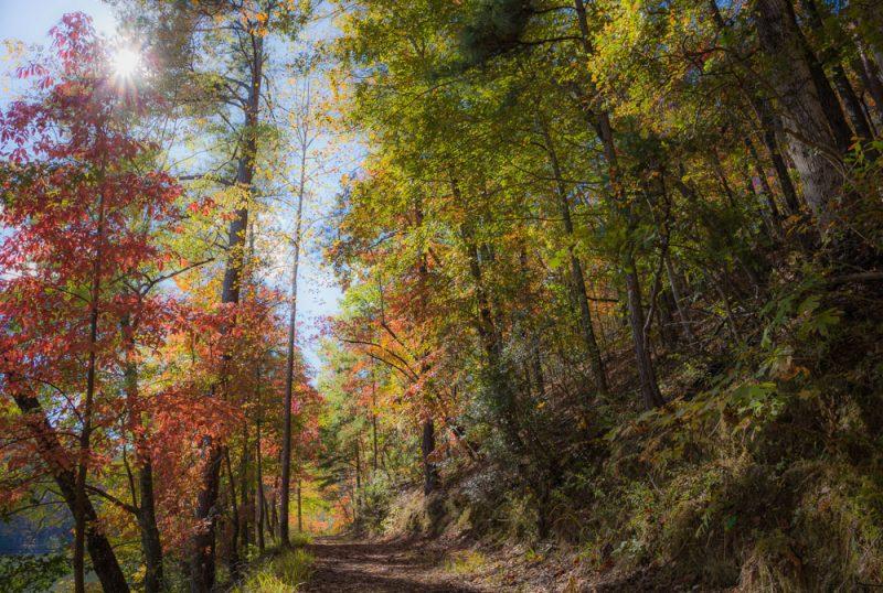 181103 oak mountain in the fall IMG_9607 S