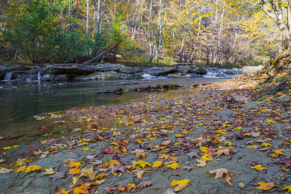 181110 Turkey Creek Nature Preserve In The Fall IMG_1324 S
