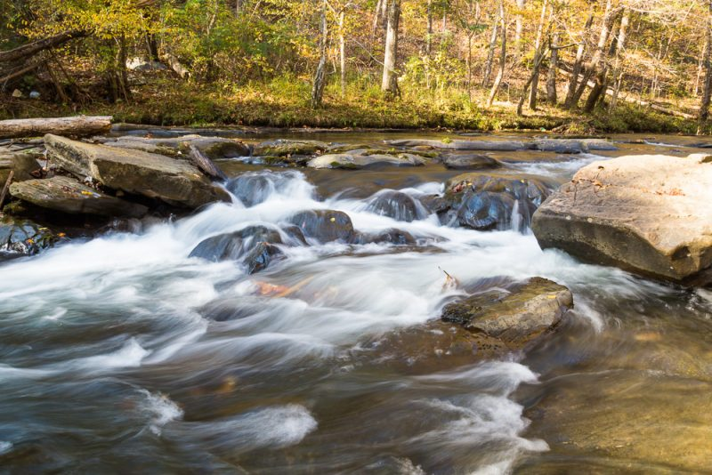 181110 Turkey Creek Nature Preserve In The Fall IMG_1364 S