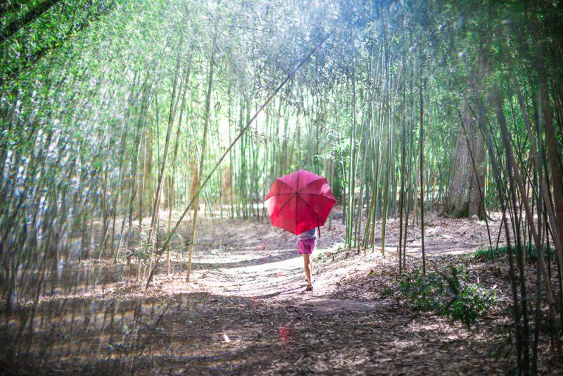 190207 Umbrella Shoot at Botanical Gardens IMG_4622 s