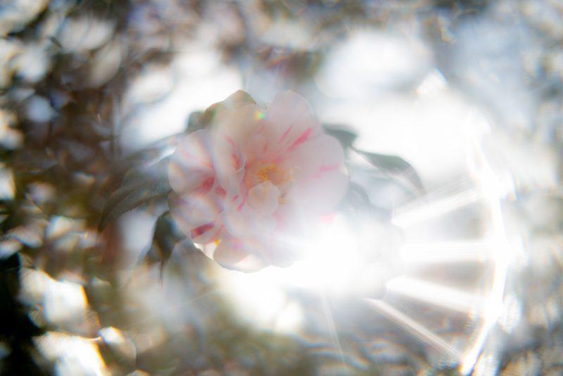 190227 flowers Botanical Gardens IMG_8307 s