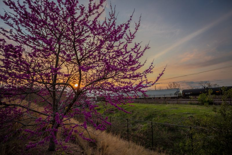 190312 Railroad Park Pink Trees and Mild Sunset IMG_0700-H s