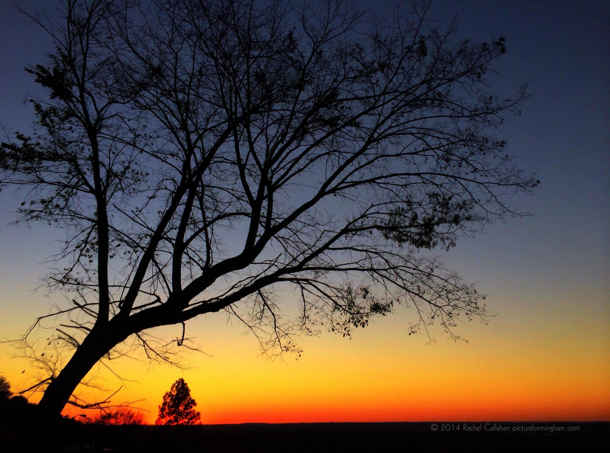 A Lion King Sunset
