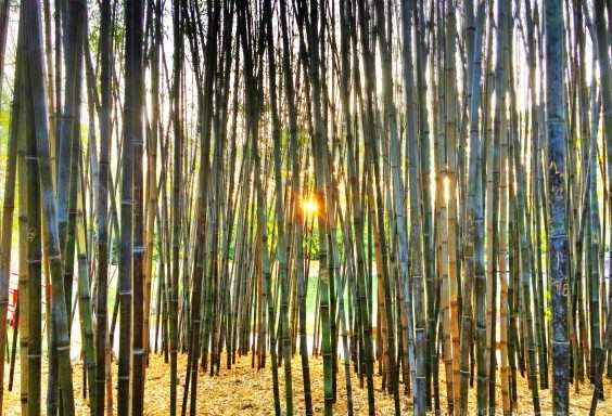 Separation By Bamboo