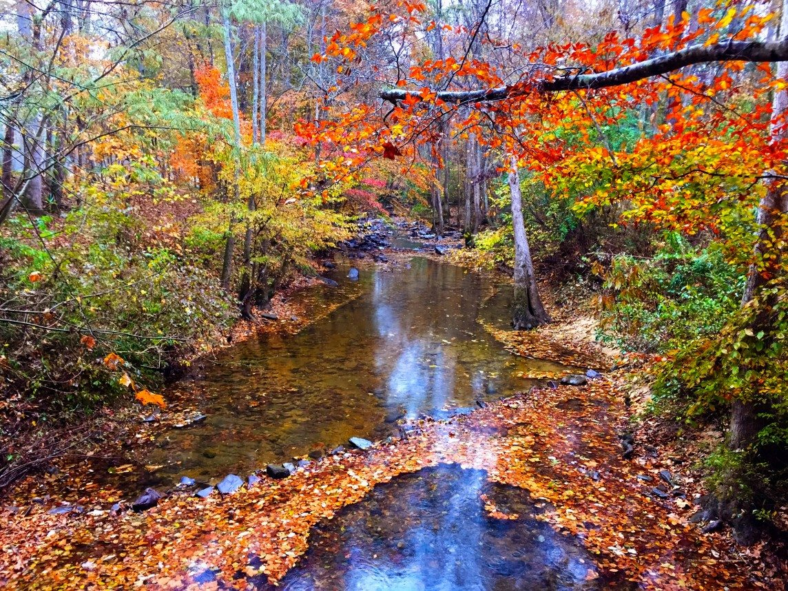 The Colors of Kelly Creek