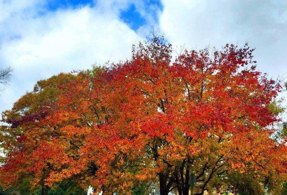 141124 The Rainbow Tree