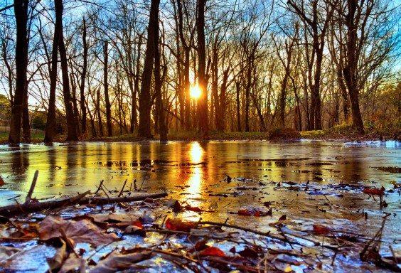 The Frozen Shores of Lakeshore Drive