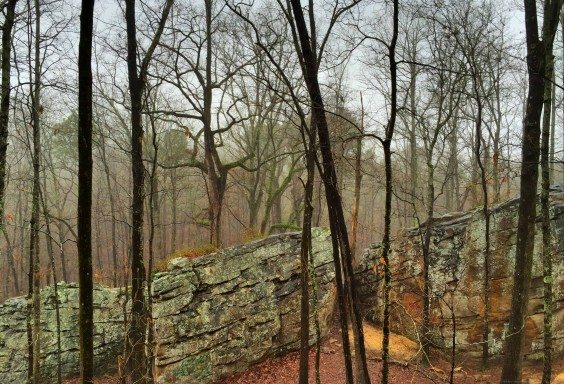 Foggy Woods at Moss Rock Preserve