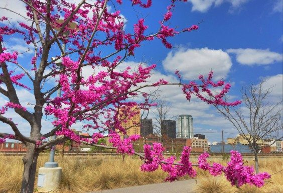 The View from Railroad Park