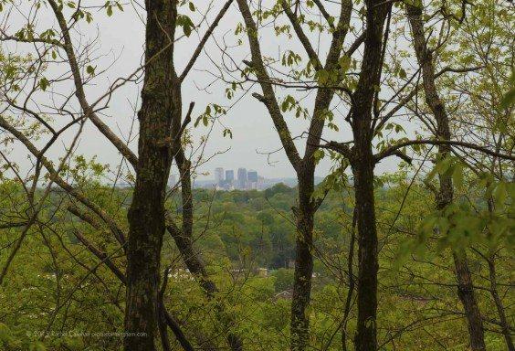 Birmingham Through the Forest
