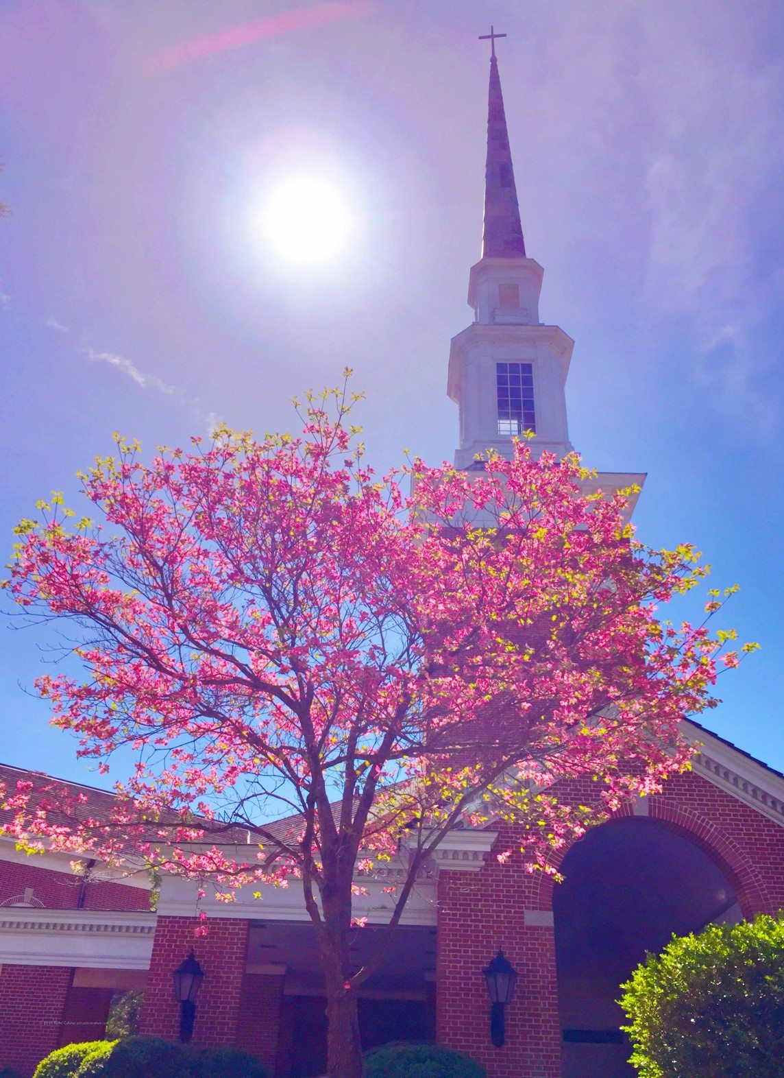 Spring Finds Mountain Brook Baptist