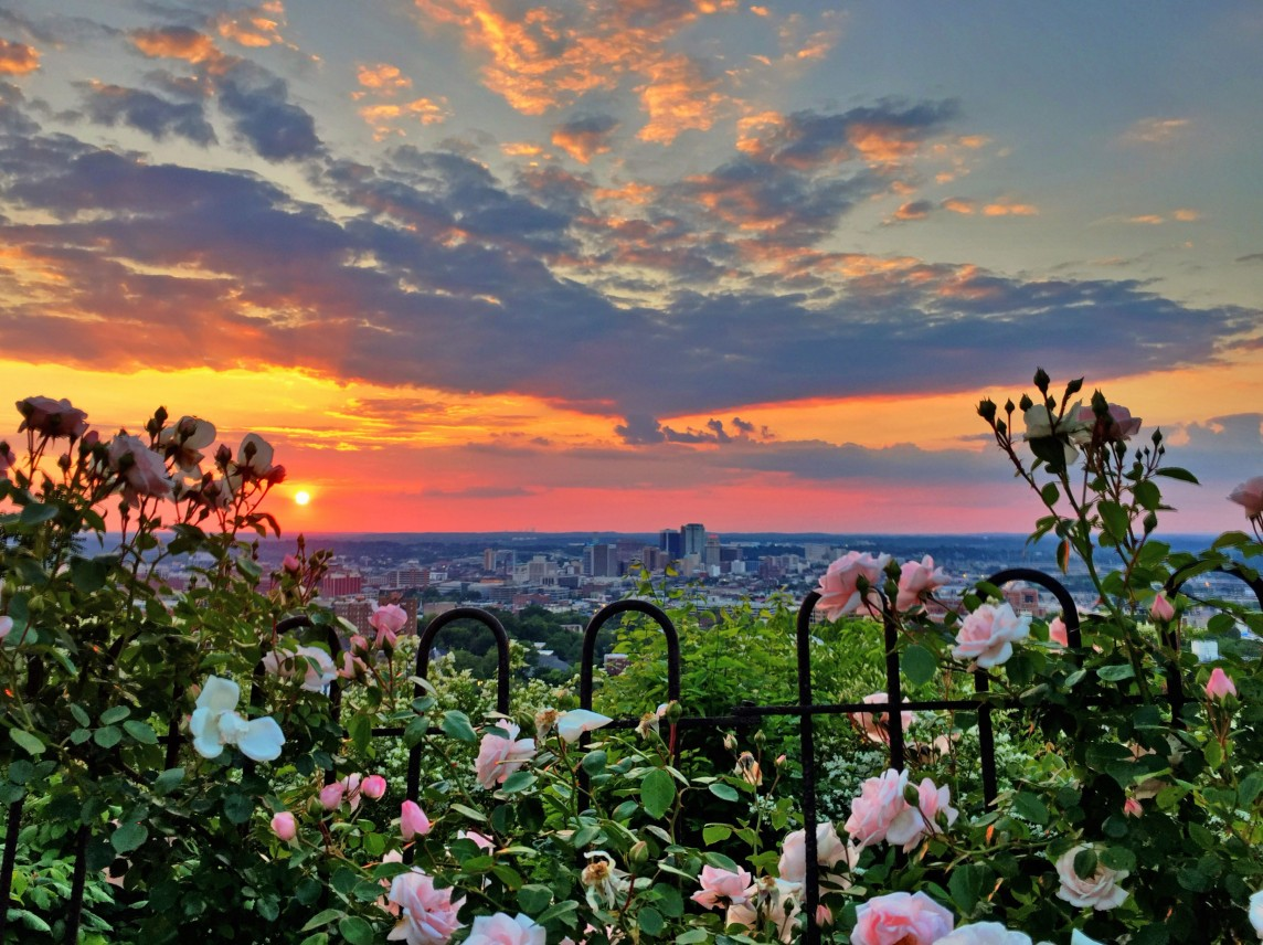 150505c Roses with a View