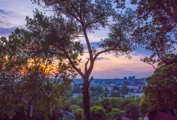 Birmingham Through the Treetops
