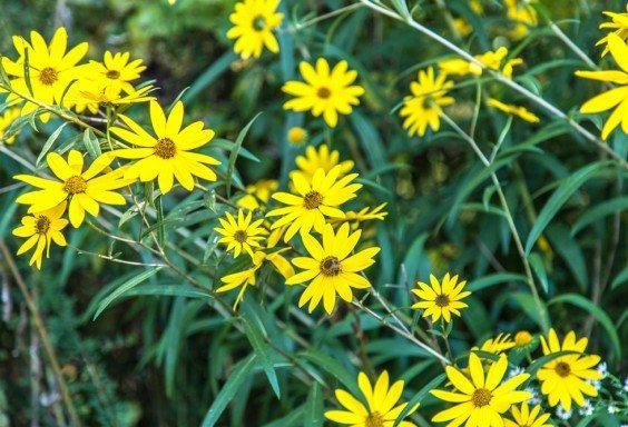 151015-Wildflowers-at-Ruffner
