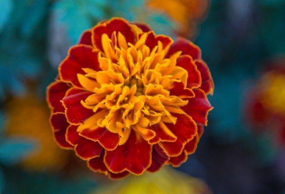 151030k-Fall-Flowers