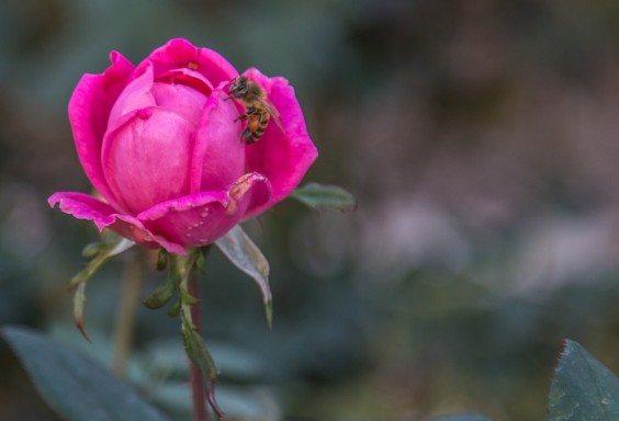 151030o-Floral-Pinata