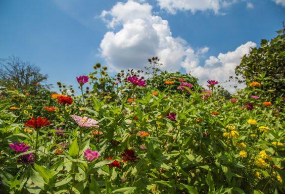 160825-Flowers-of-Crestline-Village