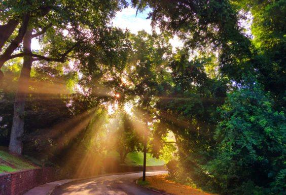 160710z-morning-beams