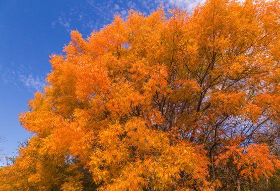 161123-amazing-tree