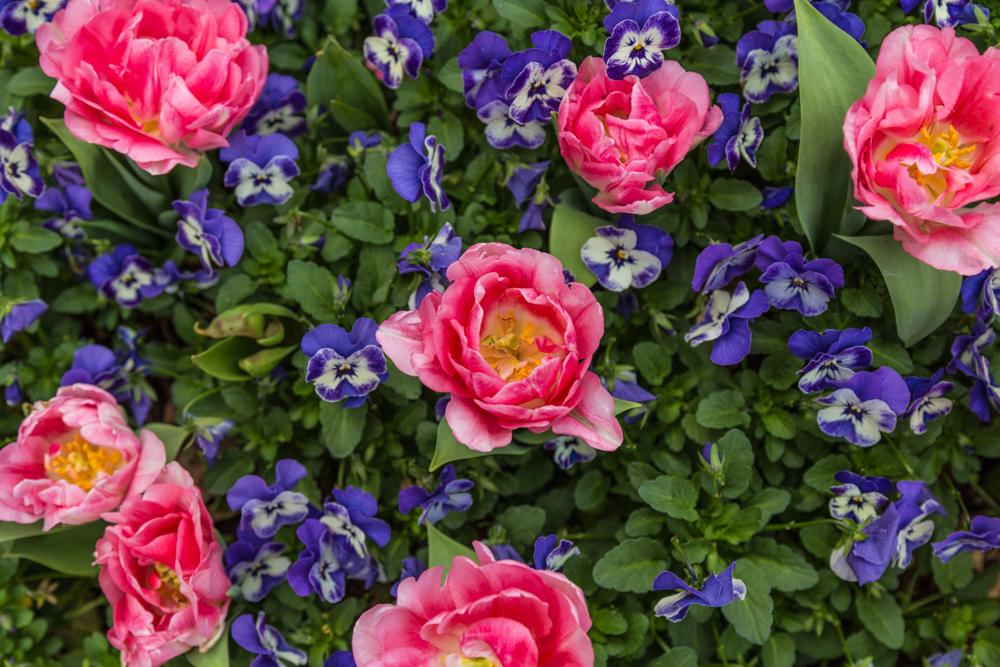 170322f-Botanical-Gardens