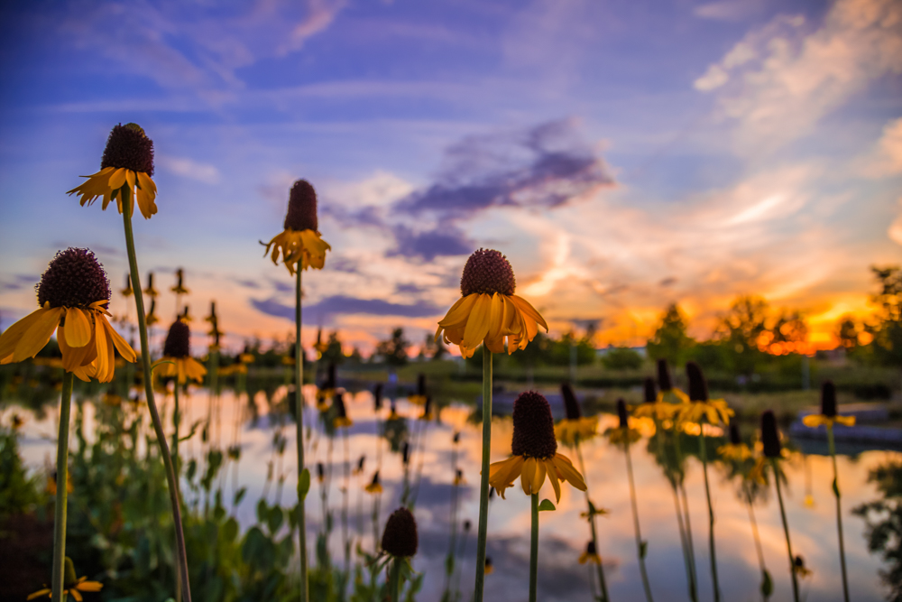 170602-Flowers-and-Sunset-at-Railroad-Park s