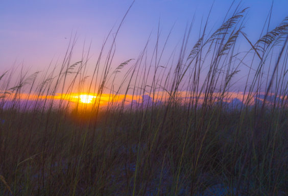 170624-Sunset-Through-the-Reeds-at-Navarre s