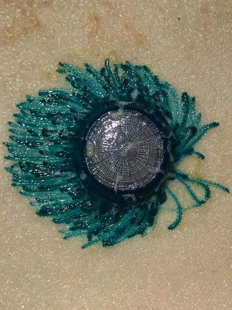 170624z-Jellyfish s