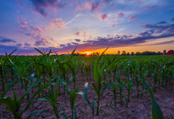 170703 Sunset in the Cornfield_MG_0130 s