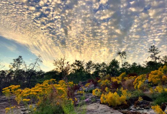 171001 When Rocks Bloom IMG_3103