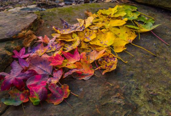 171023b Fall Leaf Scavenger Hunt IMG_4907