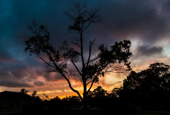 171102-Tree-Swing-Sunset-b