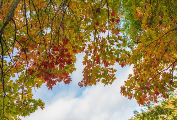 171103c November Leaves IMG_5573