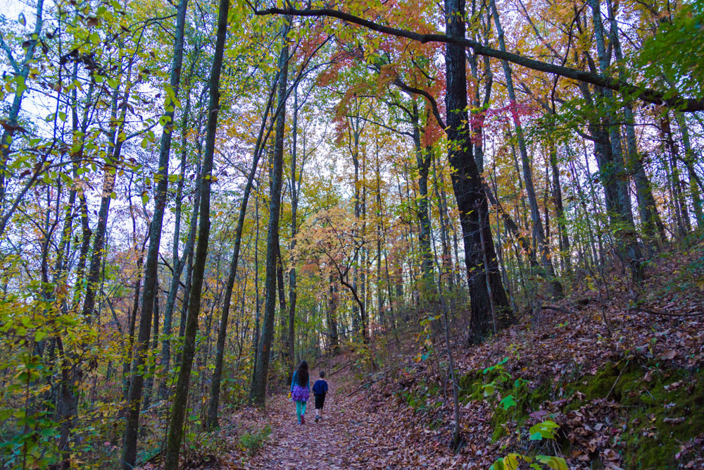 171120 Fall Forest in Ruffner Mountain IMG_2496 s