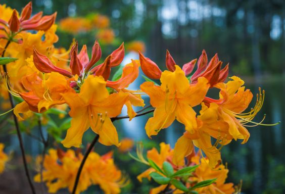 180403 Aldridge Gardens IMG_9735 S
