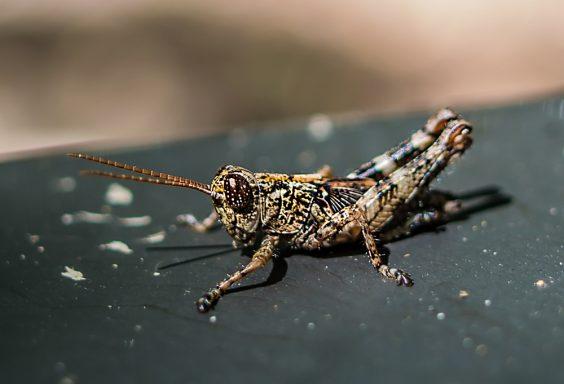 180706-Cricket-in-Turkey-Creek-IMG_9424 small