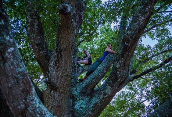 180712 Climbing the Tree over Callaway IMG_9636 s
