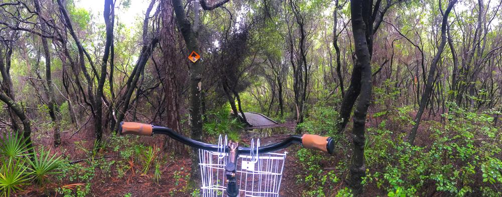 180801 longleaf greenway trail IMG_4955 s